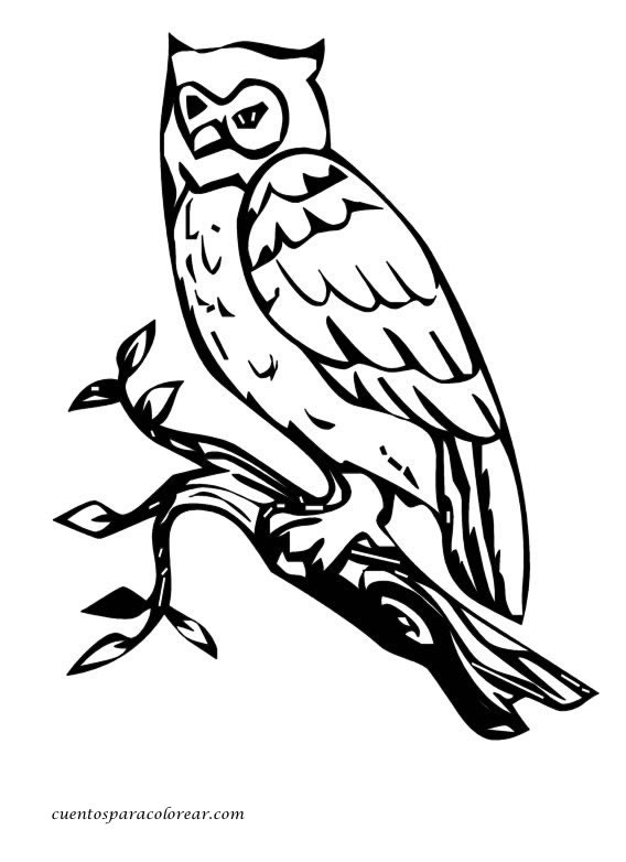 Dibujos para colorear búhos
