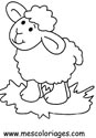 Dibujos para colorear ovejas