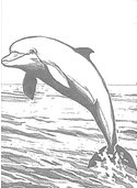 dibujos de delfines para colorear y pintar