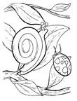dibujos de caracoles para colorear y pintar