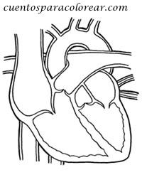 Dibujos para colorear del cuerpo humano corazón