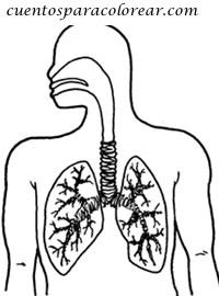 dibujo de los pulmones para colorear dibujos para colorear del cuerpo humano pulmones